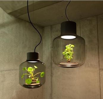 独特的绿植灯:密闭LED灯具里种植物