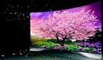 2017年LGD OLED TV面板产量倍增  目标年产180万片